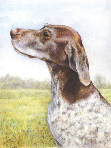 ktdukeartist-dog portrait-watercolor and colored pencil-alec