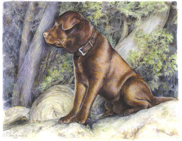 ktdukeartist-dog portrait-watercolor and colored pencil- ike