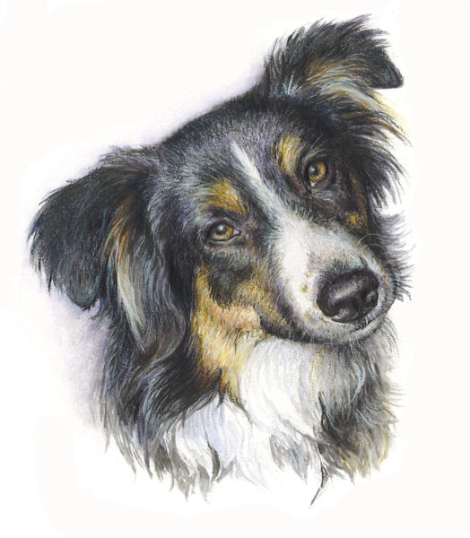 ktdukeartist-dog portrait-watercolor and colored pencil-koda