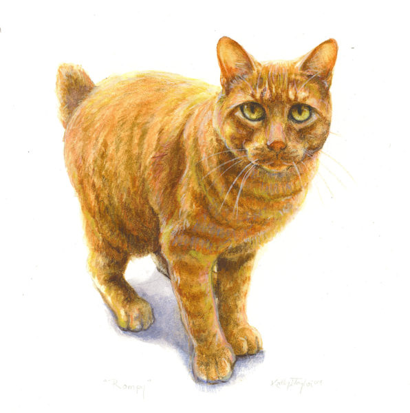 ktdukeartist-cat portrait-watercolor and colored pencil-rompy
