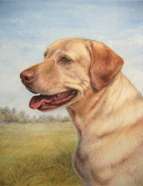ktdukeartist-dog portrait-watercolor and colored pencil-sam in field