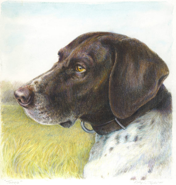 ktdukeartist-dog portrait-watercolor and colored pencil-tango