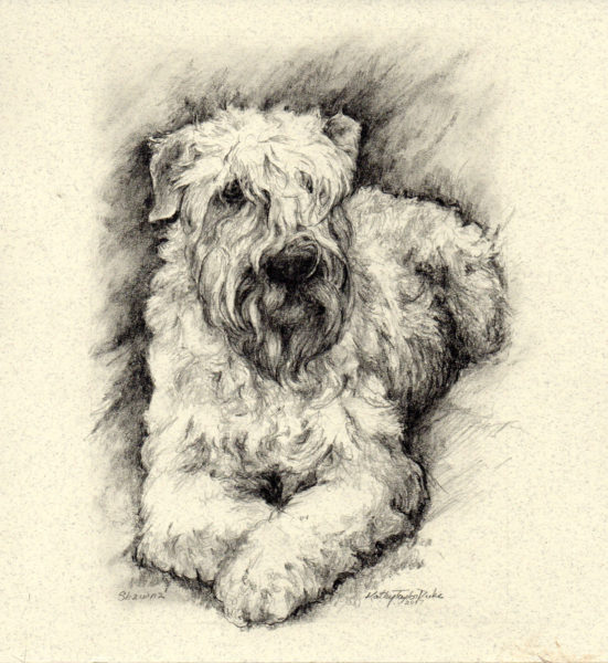 ktdukeartist-dog portrait-graphite pencil-shawna