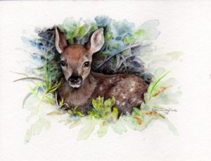 ktdukeartist-fawn-watercolor-fawn