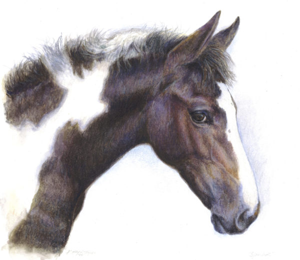 ktdukeartist-horse portrait-watercolor and colored pencil-sjambok