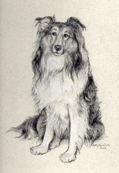 ktdukeartist- dog portrait-graphite pencil- jesse