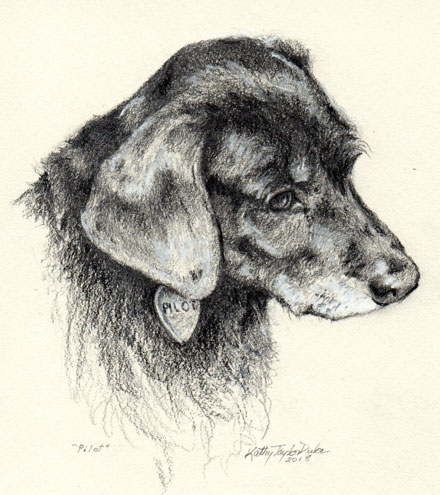ktdukeartist-dog portrait-pencil drawing-pilot