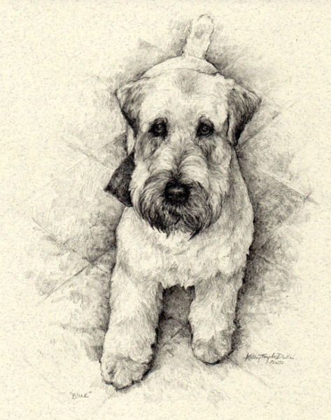 ktdukeartist-graphite pencil drawing-dogs-blue-wheaton terrier