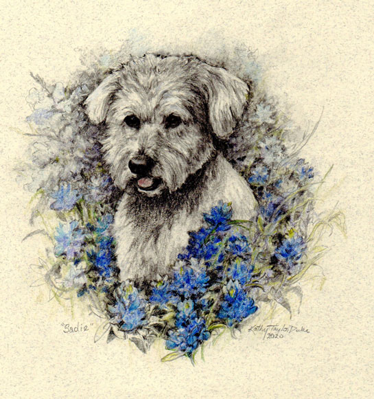 ktdukeartist-dog portrait-graphite pencil-sadie-wheaton terrrier