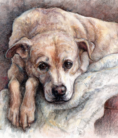 ktdukeartist-watercolor & colored pencil-dog portrait-sweetie