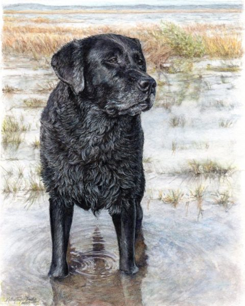 """Portrait of black labrador retriever, Brogan, standing in marsh. 8""""x10"""" watercolor and colored pencil painting on paper"""