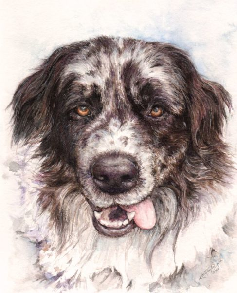 """6""""x8"""" watercolor and colored pencil portrait of Ashkii, Australian Shepherd/Pyrenees dog, close up of dog's face"""