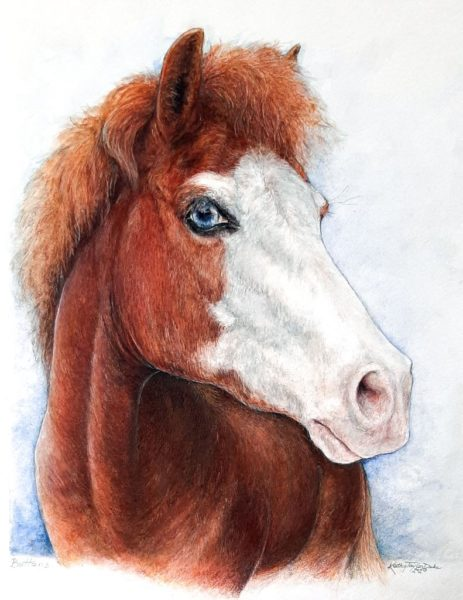 """watercolor and colored pencil on watercolor paper portrait of """"Buttons"""", a blue eyed paint pony"""