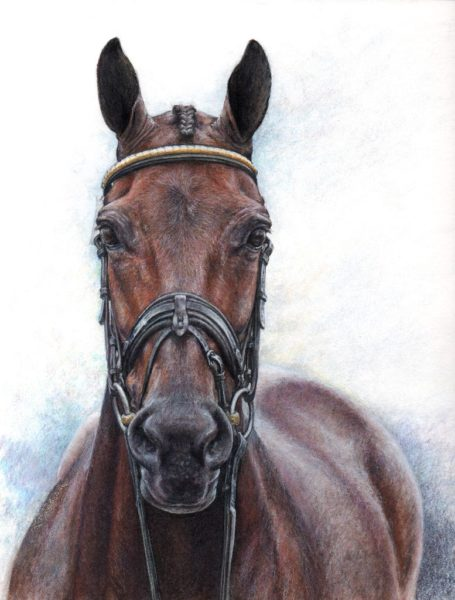 """Portrait of US eventing horse """"Donner"""", Lynn Symanski rider, watercolor and colored pencil on watercolor paper"""