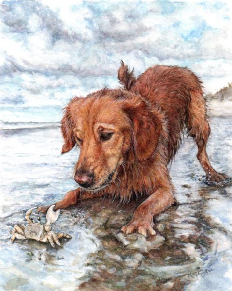 """watercolor and colored pencil portrait of golden retriever """"Goose"""" playing with crab on the beach"""